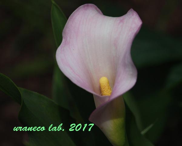6月3日桃色カラー