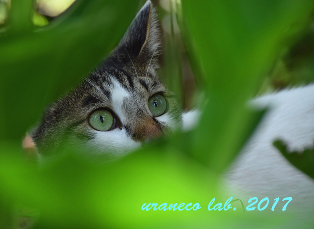 7月6日a cat in the green