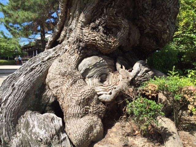 ヒプノセラピー スピリチュアルライフ 法隆寺 渦巻き 老木