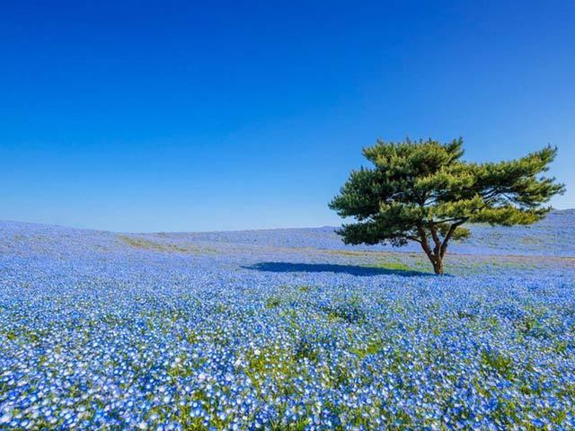 ヒプノセラピー スピリチュアルライフ 花畑
