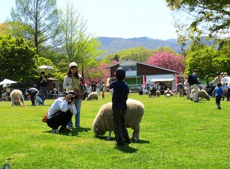 IMG_9994羊の散歩