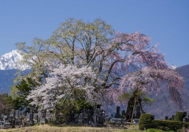 富士見町2_01