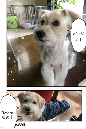 IMG_8496_20170429.jpg