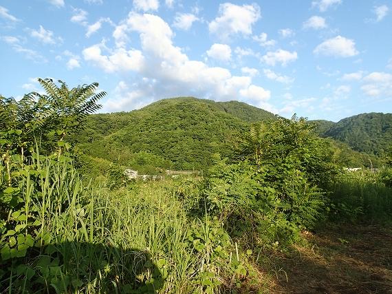 酒匂川の山20170606