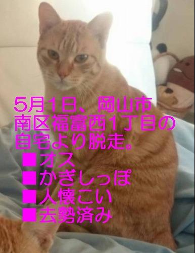 IMG_3971 - コピー