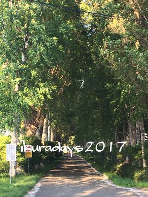20170617_ジンギ並木