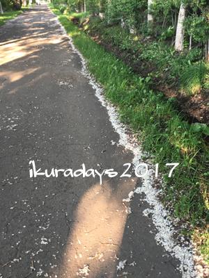 20170617_綿毛1