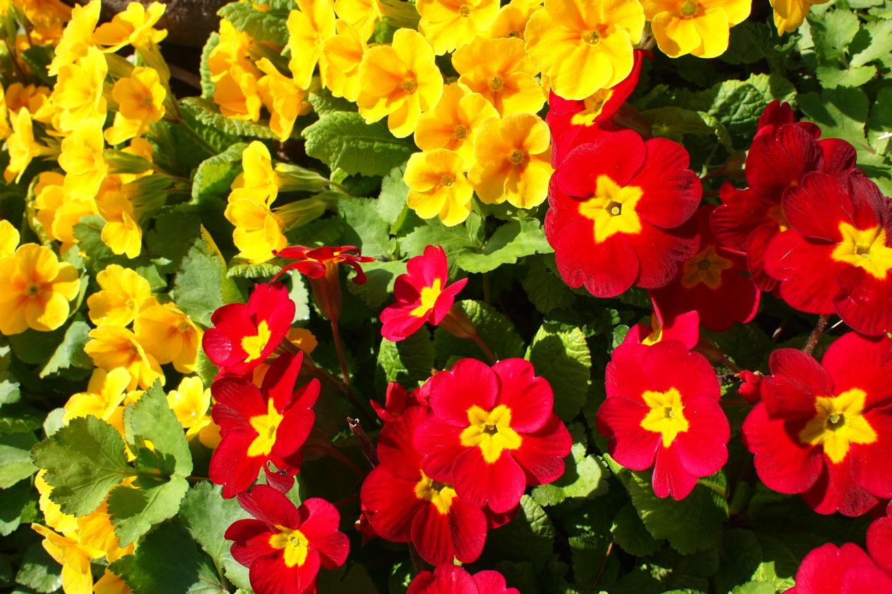 黄と赤の花