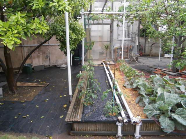 土壌水分制限スペース1