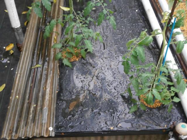 土壌水分制限スペース2