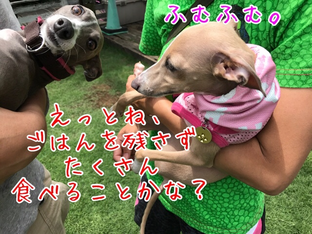 fc2blog_20170531152008008.jpg