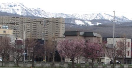 白いお山と桜