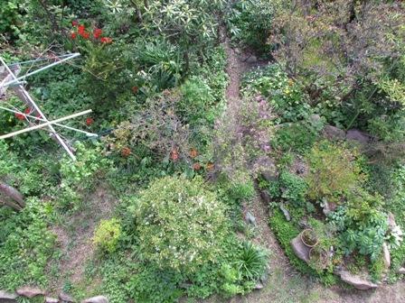 ジャングル化
