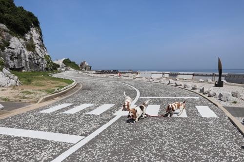 白崎海洋公園0005