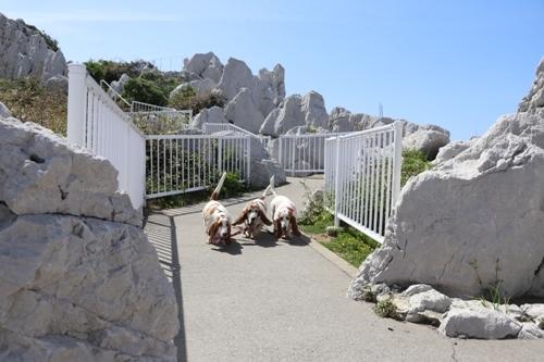 白崎海洋公園0016