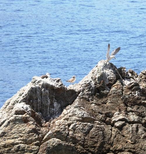 白崎海洋公園0022