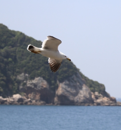 白崎海洋公園0023