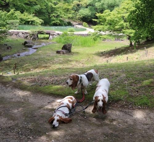 山田池公園0017