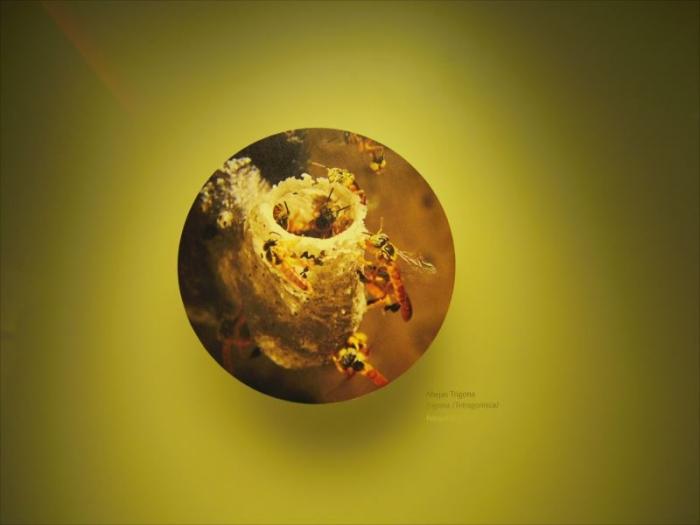 黄金博物館 (9)