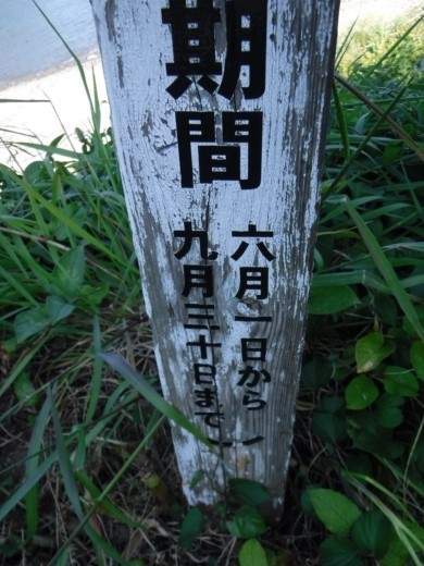 大瀬の先 (3)