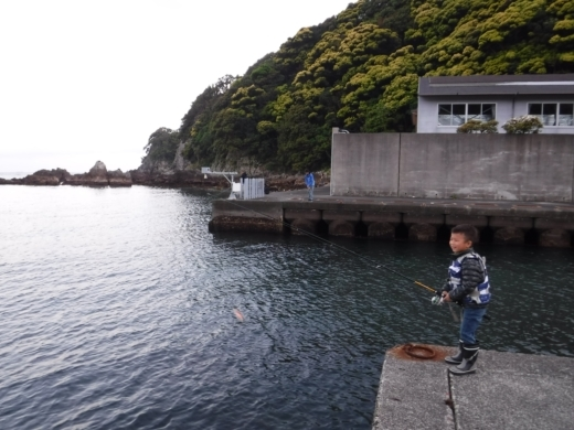 漁港でキャンプ (8)