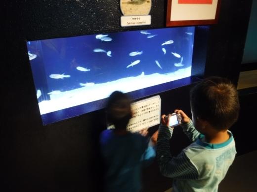 下田海中水族館 (8)