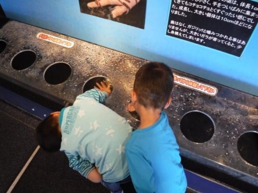 下田海中水族館 (14)