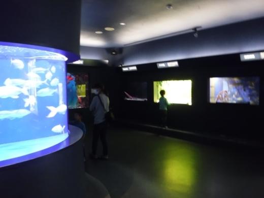下田海中水族館 (17)