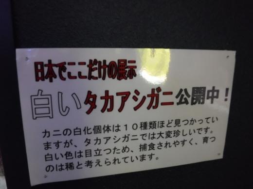 下田海中水族館 (23)