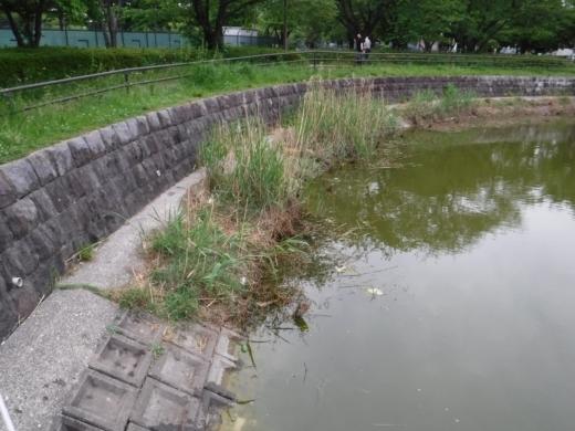 出羽公園 (18)