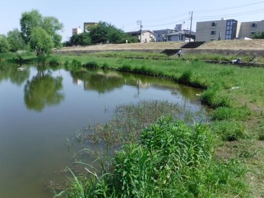 多摩川登戸釣り (13)