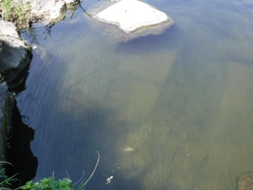 多摩川登戸釣り (12)