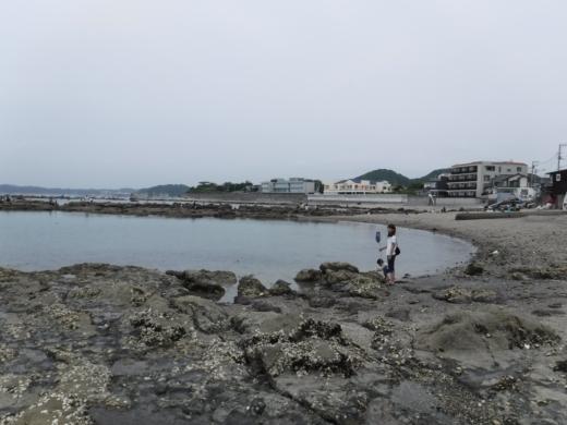 葉山の釣り (15)