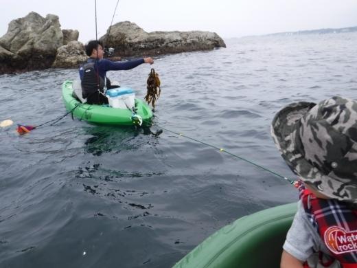 葉山の釣り (53)