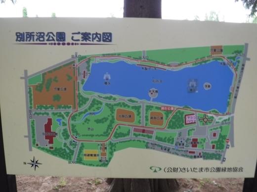 別所沼公園雑魚釣り (22)