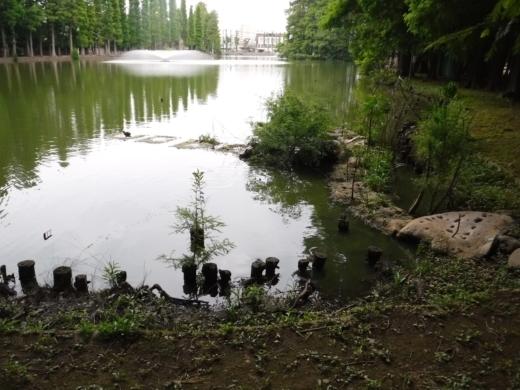別所沼公園雑魚釣り (24)