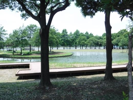 みさと公園 (8)
