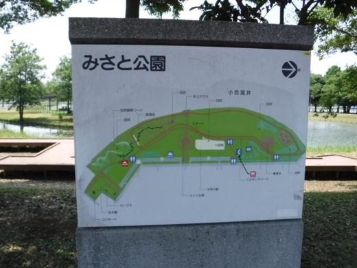 みさと公園 (9)