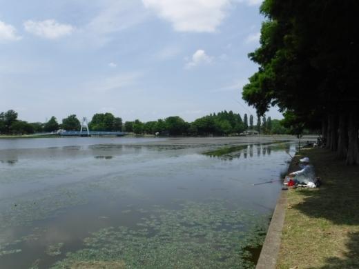みさと公園 (14)