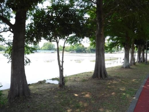 みさと公園 (15)