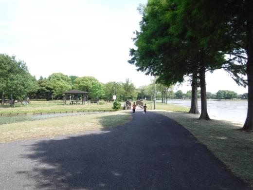 みさと公園 (28)