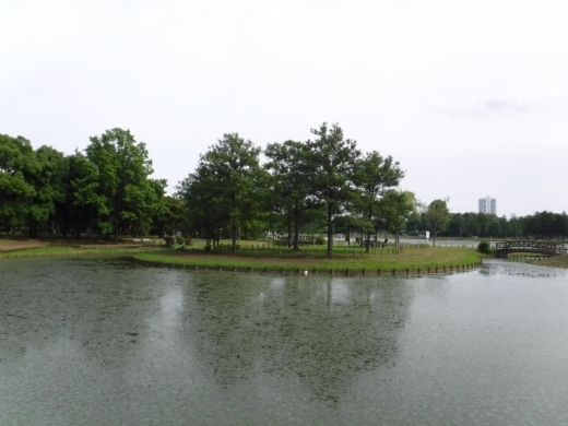 みさと公園 (39)