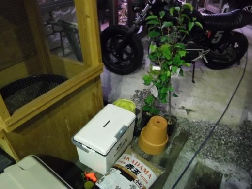 カブトムシ小屋 (4)