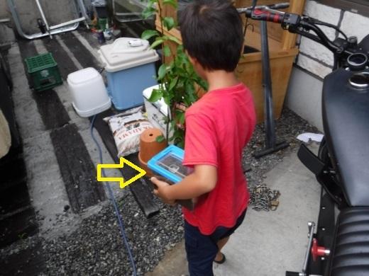 カブトムシ小屋 (7)