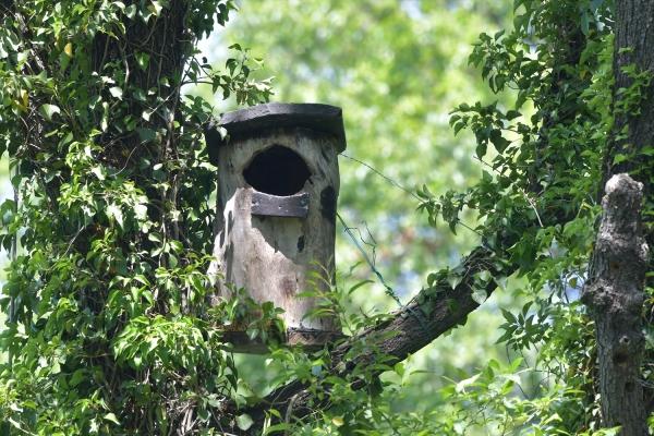 フクロウの巣箱20170523