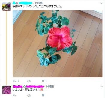 Twitter0515_1