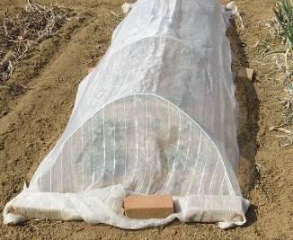 有機菜園、防虫ネット利用
