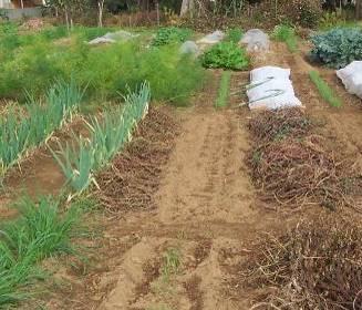 有機菜園の土作り収穫物残渣利用