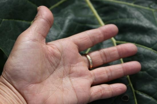トマトの木(タマリロ)_3495 (3)