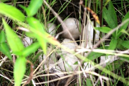 かもちゃんの卵_3513 (2)
